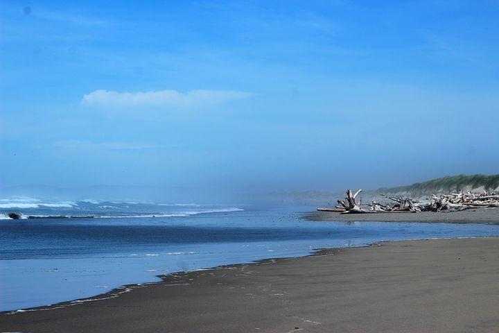 Beach Driftwood, Ocean, Oregon