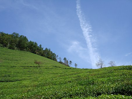 Green Tea Plantation, Cloud, Serenity, Sky, Boseong