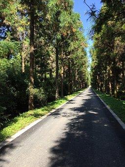 Shanghai, Chongming, Dongping, Forest Park, Metasequoia