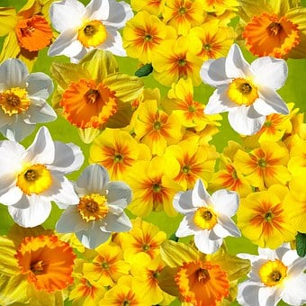 Graphic, Daffodils, Easter, Spring, Yellow