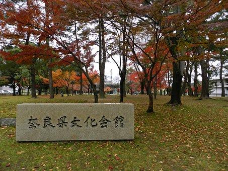 Japan, Park, Japanese, Asia, Nature, Fall, Autumn