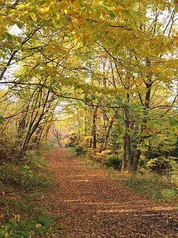 Autumn, Autumnal Leaves, Fall Of Japan, Maruyama Park