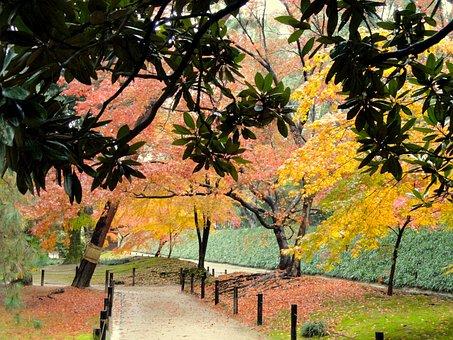 Okayama, Japan, Park, Fall, Autumn, Trees, Foliage