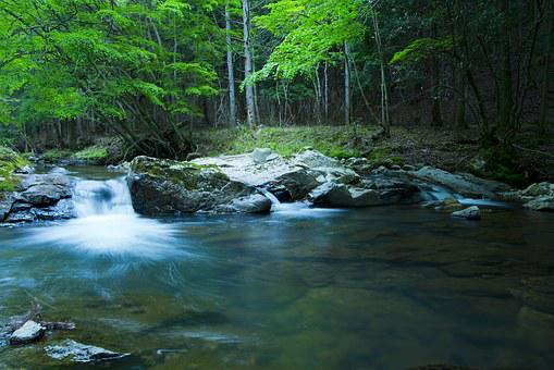 River, Mountain, Landscape, Fall, Forest, Clear Stream