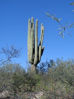 Cactus, Arizona, Desert, Southwest, Nature, Landscape