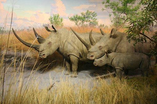 Rhino, Animal, Zoo, Pachyderm, Big Game, Mammal, Horn
