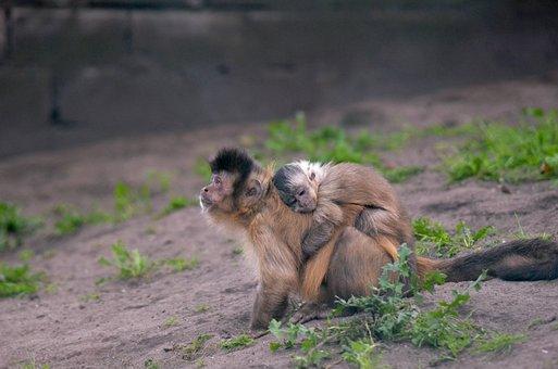 Monkey With Baby, Monkey With Child, Monkey Child