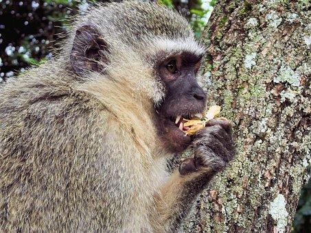 Monkey, Monkeys, Animal, Monkey Family, Wild, Mountain
