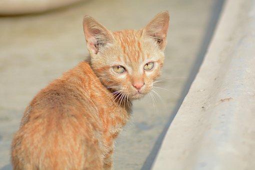Cat, Animal, Angry, Pet, Close, Brown