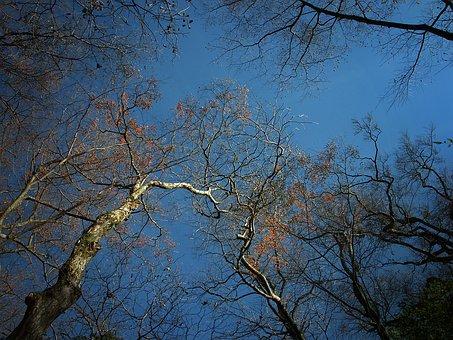 Wood, Winter, Fallen Leaves, Sky, Fine Weather, Japan