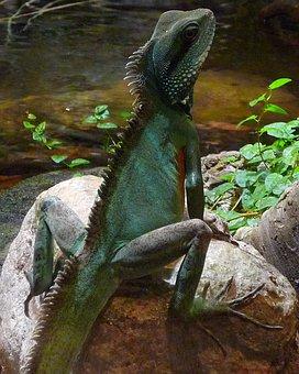 Lizard, Sitting, Rock, Stone, Wildlife, Animal