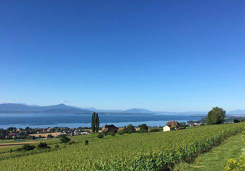 Vineyard, Lake, Switzerland, Water, Landscape, Sun