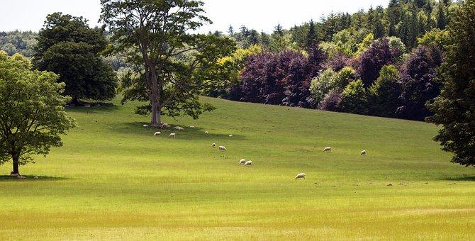 South Downs, West Sussex, English Landscape, Grass