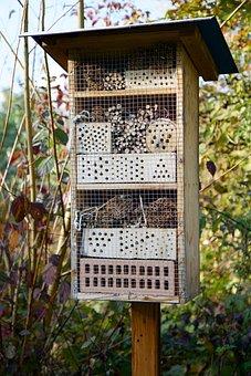 Nature, Wood, Wild Bees, Wild Bee Hotel