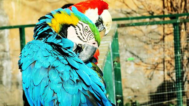 Ave, Macaw, Parrot, Zoo, Animal, Exotic Bird