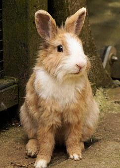 Rabbit, Hare, Pet, Cute, Animal, Sweet, Small Hare