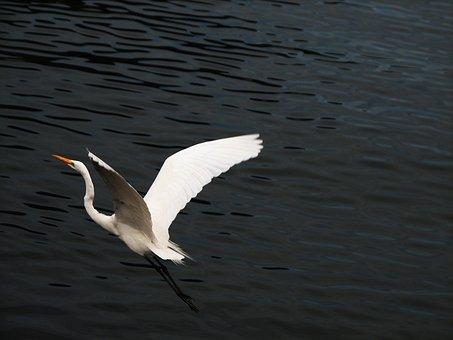 Bird, Heron, Nature, Encyclopedia, Animals, Environment