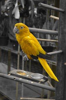 Arara, Animals, Nature, Bird, Tropical Birds, Birdie