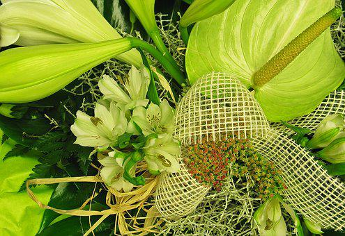 Anthurium, Green Anthurie, Flamingo Flower