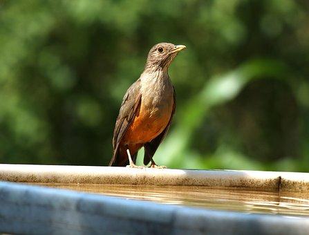 Know Orange, In The Water Cooler, Bird, Wild
