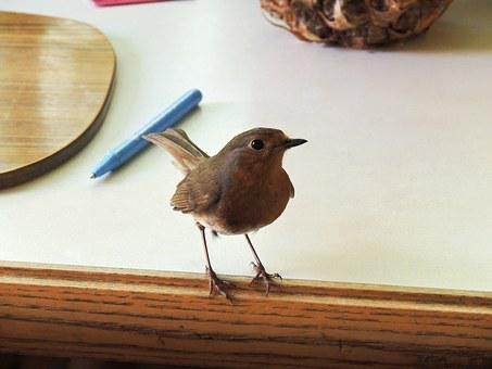Robin, Red, Red Breast, Breasted, English, Bird