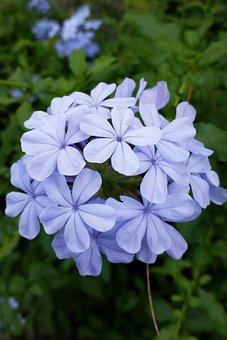 Miramelinda, Joy, Flower, Corsage, Blue, Petals