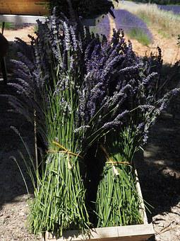 Lavender, Lavender Bunches, Tufts, Sale, Blue, Bouquet