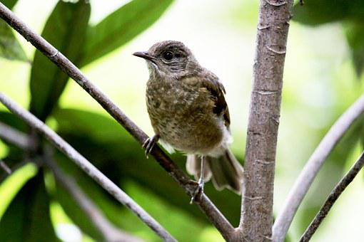 Paige, Bird, Tropical, On The Branch, Wild, Looking