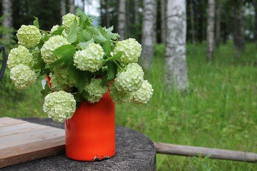 Snow Ball, Summer, Finnish, Nature, Birch, Well, Jug