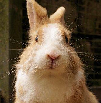 Rabbit, Hare, Pet, Cute, Animal, Sweet, Small Hare
