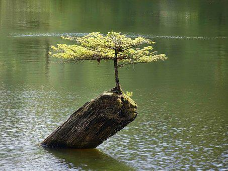 Tree, Bonsai, Botany, Plant, Small, Miniature, Dwarf