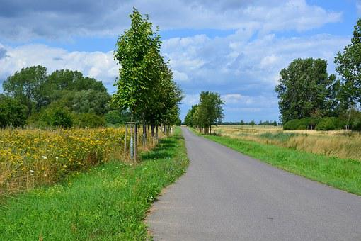 Landscape, Nature, Trail, Cycle Path, Trees, Reported