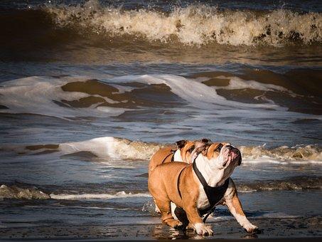 Dogs On The Beach, Playing Dogs, Dog On Beach, Fun, Sea