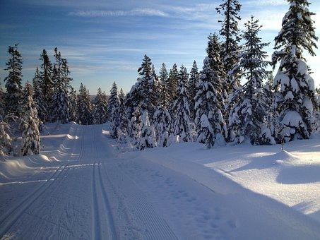 Skiing, Ski, Nordic, Snow, Winter, Sport, Skier, Cold