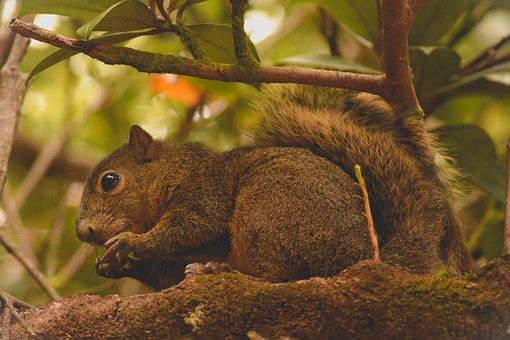 Squirrel, Nature, Animal, Animals, Fauna, Rodent