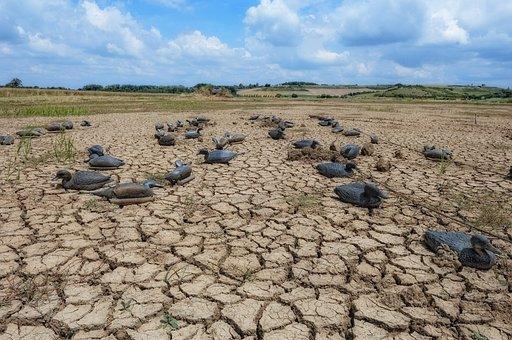 Ducks, Marsh, Drought, Estuary, Gironde, Nature