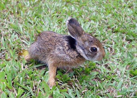 Rabbit, Bunny, Easter, Animal, Cute, Hare, Pet, Grass