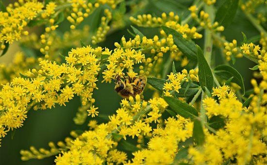 Osa, Pollination, Nature, Sunny, Insects, Summer