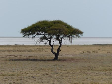 Tree, Safari, Etosha Pan, Etosha National Park