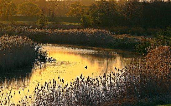 River, Reed, Elbe, River Bend, Morning Light, Sunrise