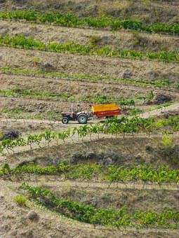 Vineyards, Priorat, Tractor, Viticulture, Terraces