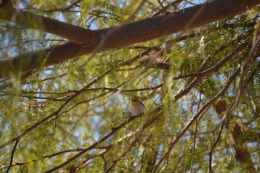 Verdin, Nature, Tree, Wings, Bird, Animal, Wildlife