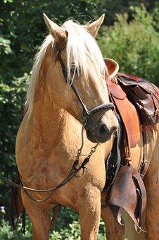 Horse, Head, Mane, Look, Eyes, Animals, Light Brown