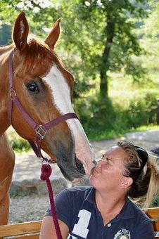 Horse, Head, Look, Eyes, Animals, Brown, Equine