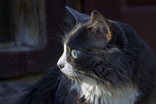 Cat, Cat Close-up, Meow