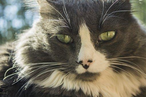 Cat, Close-up View, Meow