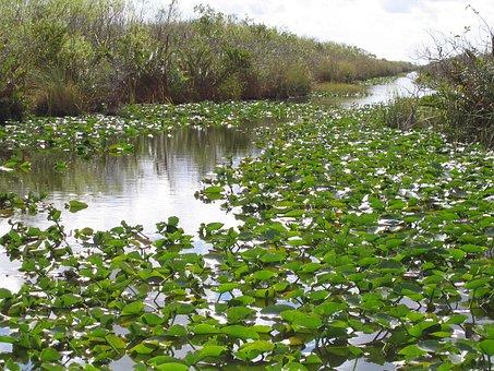 Everglades, Florida, Swamp, Nature, Wilderness, Green
