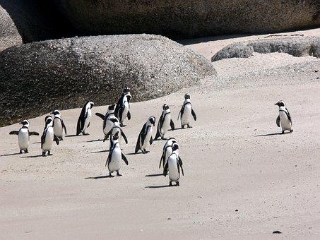 Penguins, Jackass, Beach, Sand, Wildlife, South Africa