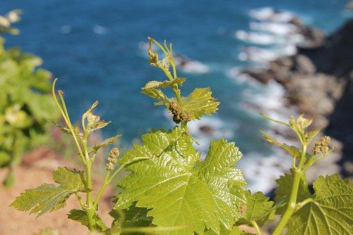 Green, Leaf, Vine, Reason, Sea, Ocean, Roche, Side