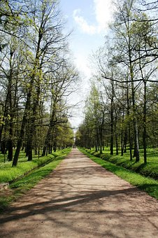 Path, Pedestrian, Trees, Rows, Lined, Garden